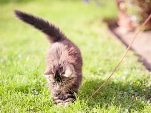 Katze Speedy 2